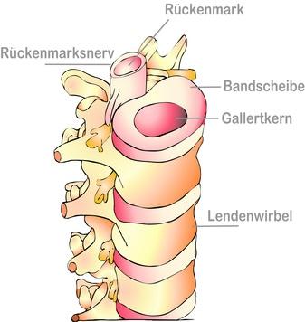 Zeichnung des Aufbaus der Wirbeksäule